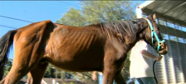 21 Horses Rescued From Near Death On Davie Ranch