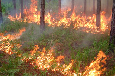 Prescribed Burn Alert