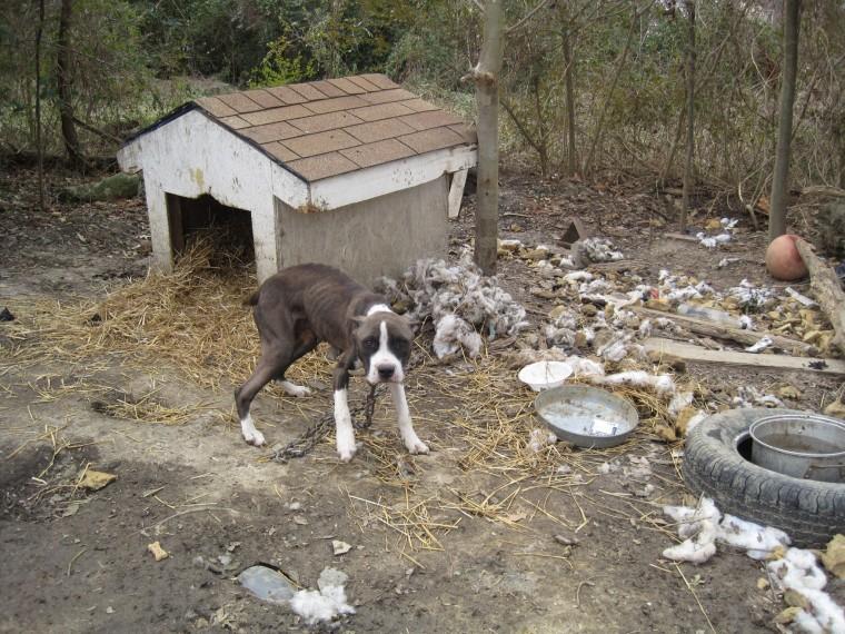 dog tethering, ocala, marion county