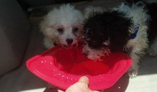 Puppies Rescued From 123 Degree Car