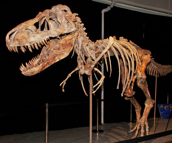 Former Gainesville man sentenced to prison for Tyrannosaurus bones