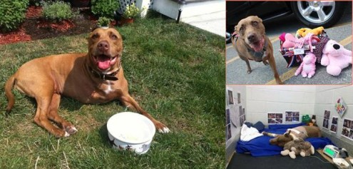 lilly the dog, pit bull, dog saves woman from train