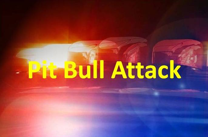 Pit bull attack kills boy