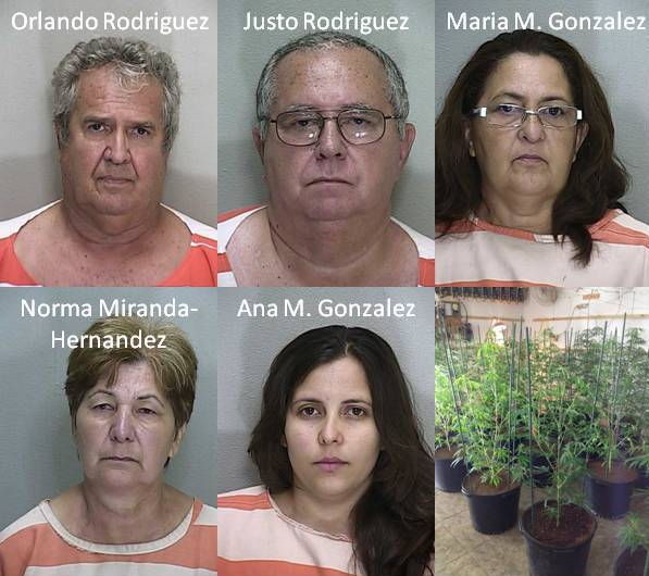Five busted for marijuana grow houses in Ocala