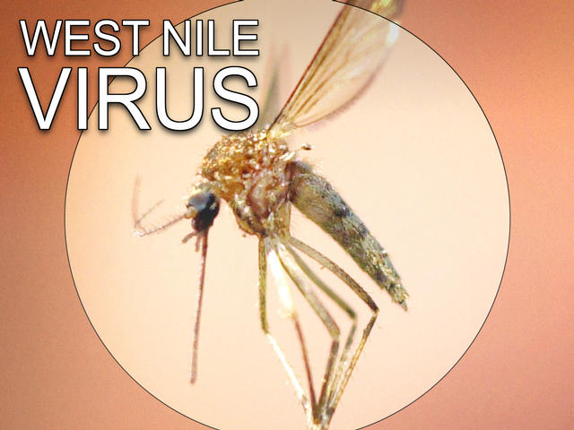 Marion County horse tested positive for West Nile virus
