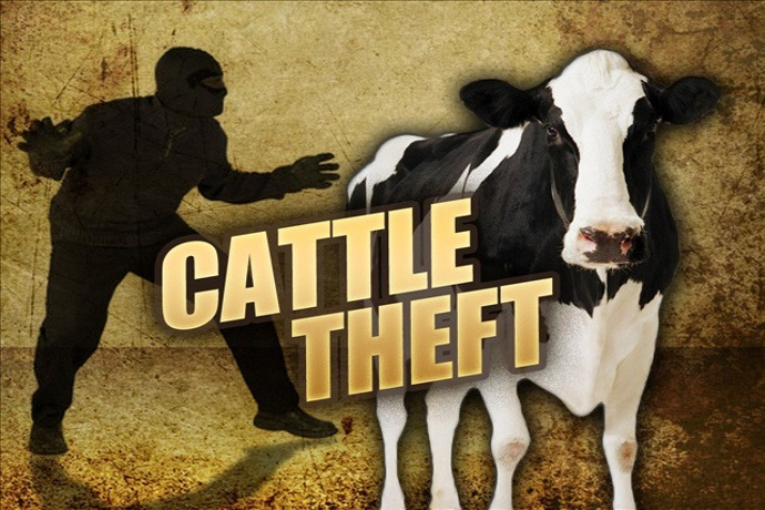 cow theft, angus beef, ocala news