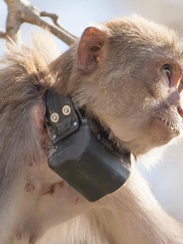 Ocala photographer believes monkey was harmed by UF researchers