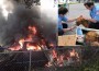 fire, ocala news, mcfr, dogs saved from fire, oxygen masks