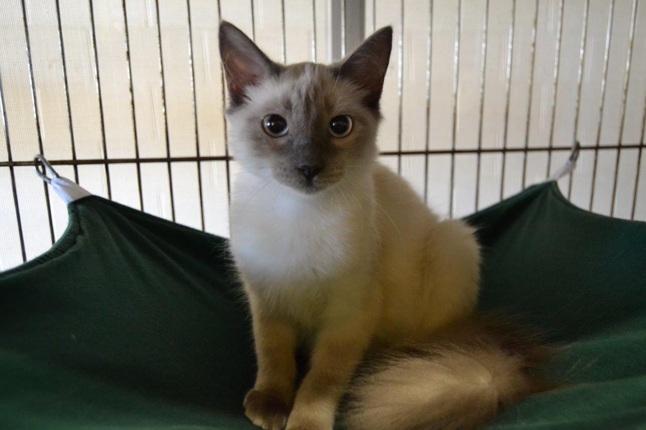 ocala news, marion county news, adopt a cat, animal services, animals, pets