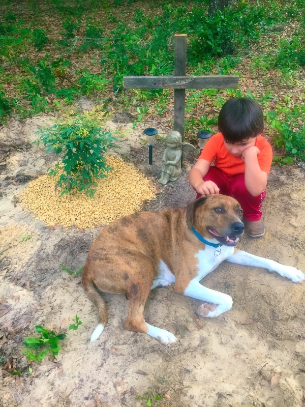 Investigation open after family pet slain