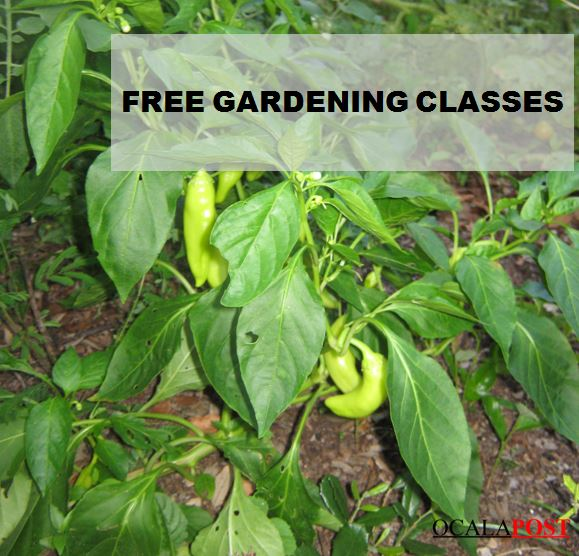 free gardening, ocala news, marion county news, gardening in florida