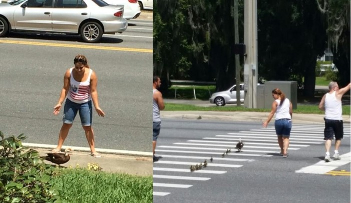 Good Samaritans save a mother and her baby ducklings