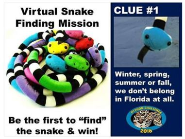 "FWC releases ""snakes"" throughout Florida, part of 2016 Python Challenge"