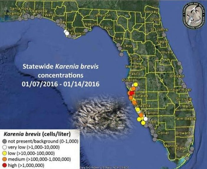 Red tide report as of January 14, 2016