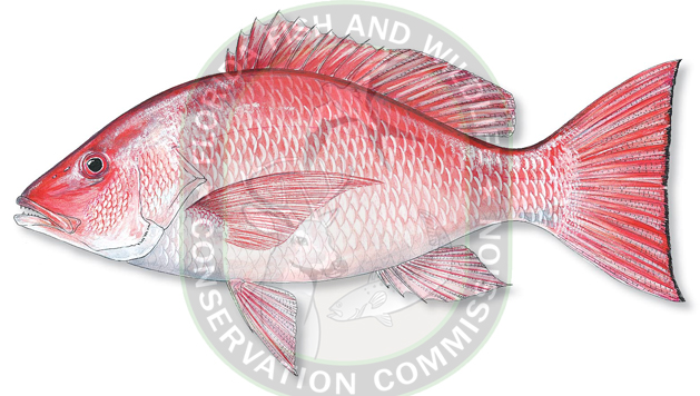 Ocala post 2016 gulf recreational red snapper state for Kmart fishing license