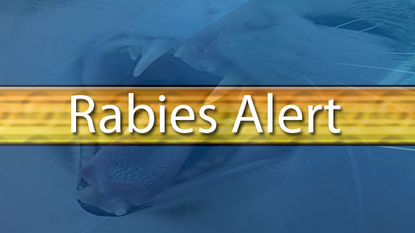 Rabies alert for parts of Marion County
