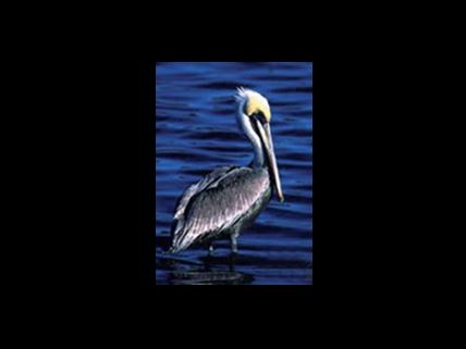 New Critical Wildlife Area in Volusia County