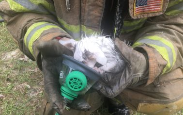 Firefighters save two cats from fire