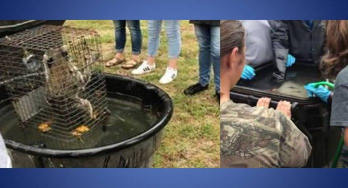 Superintendent: Forest High School teacher who drowned animals should be fired, statement released