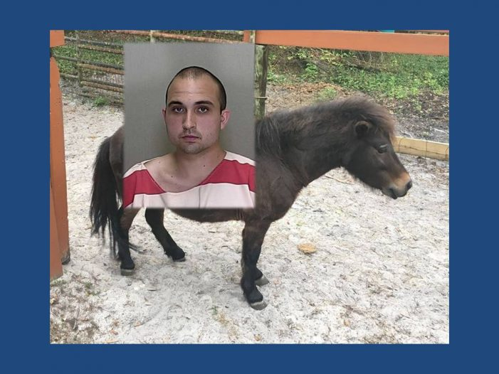 Man arrested after he mounted horse