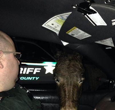 donkey, marion county, ocala post