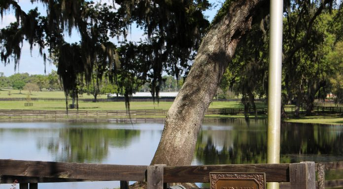 glen hill farm, ocala news, trinity lane,