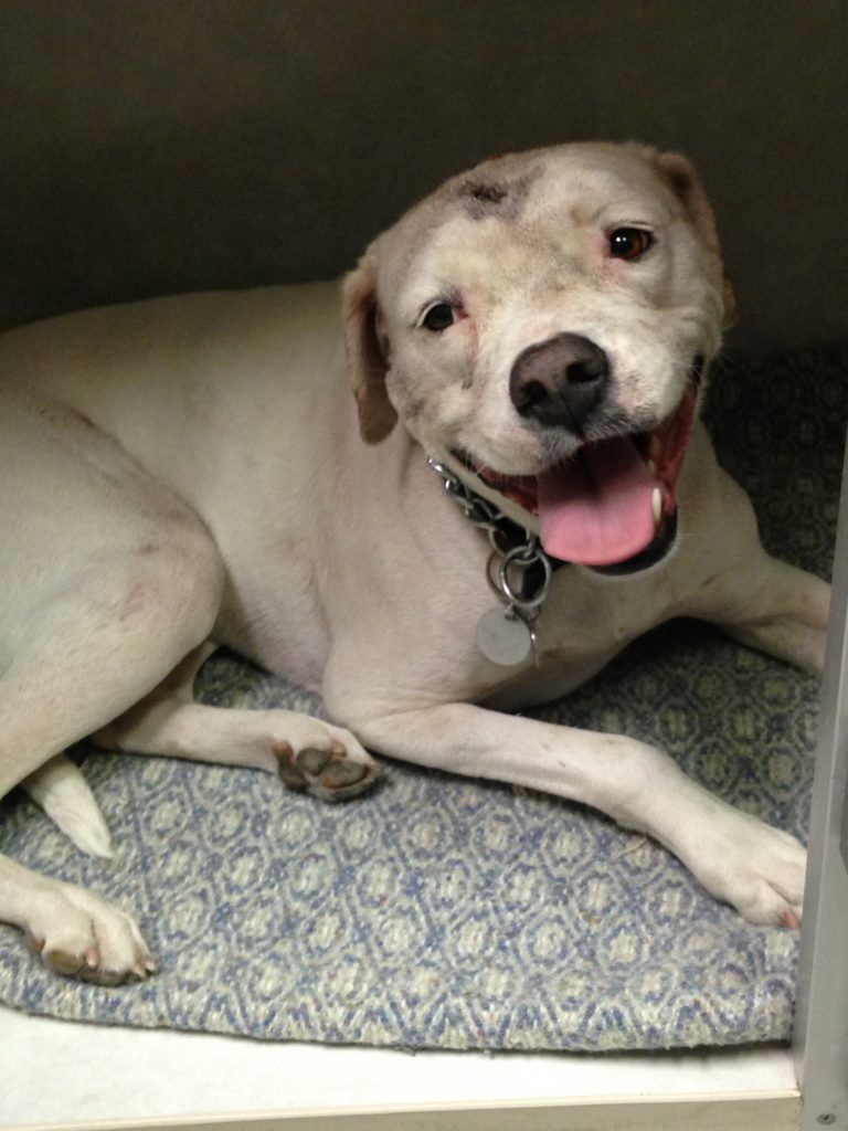 """""""Molly the dog"""" makes miraculous recovery after brutal stabbing"""
