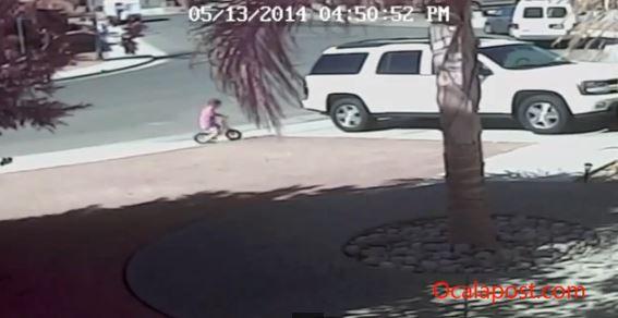 cat saves boy, california, dog attack