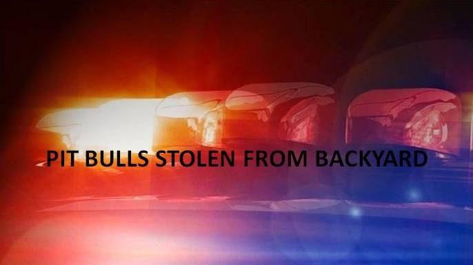 17 pit bulls stolen, ocala news
