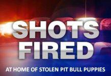 stolen pit bulls, ocala news