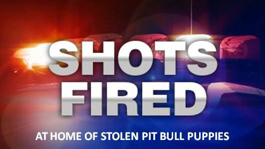 Shots fired into Ocala home;pit bull puppies stolen