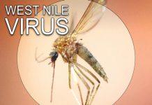 West Nile virus, marion county, ocala news