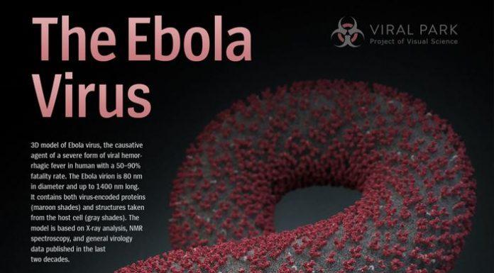 ebola, florida, texas, ebola facts, ocala news, news 13