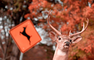 Shooting at deer from car, hunting in the forest, ocala national forest, ocala news, buck