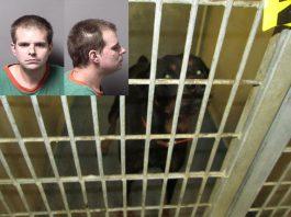 dogs kill kid, ocala news, citrus county news, crystal river news, dogs, rottweilers