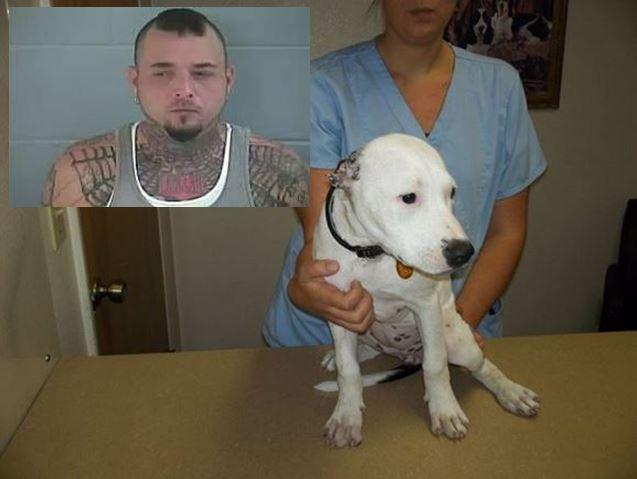 Man cut ears off dog