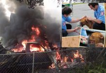fire, ocala news, mcfr, dogs saved from fire, oxygen masks