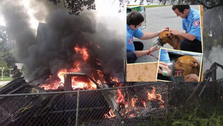 Firefighters saved 5 dogs from fire