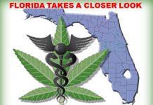 marijuana, florida, ocala news, marion county news, gainesville news,