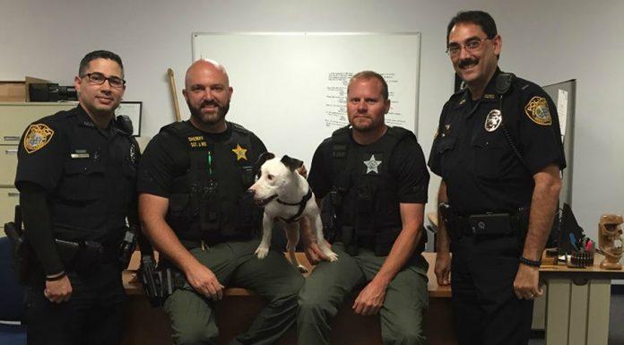 ocala news, marion county news, ocala post, gabe the pit bull