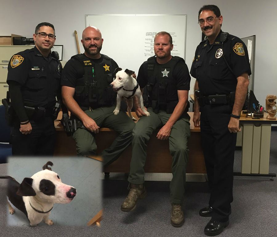 ocala news, marion county news, ocala post, gabe the pit bull