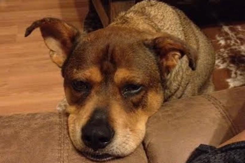 ocala news, marion county news, dog shot and killed,