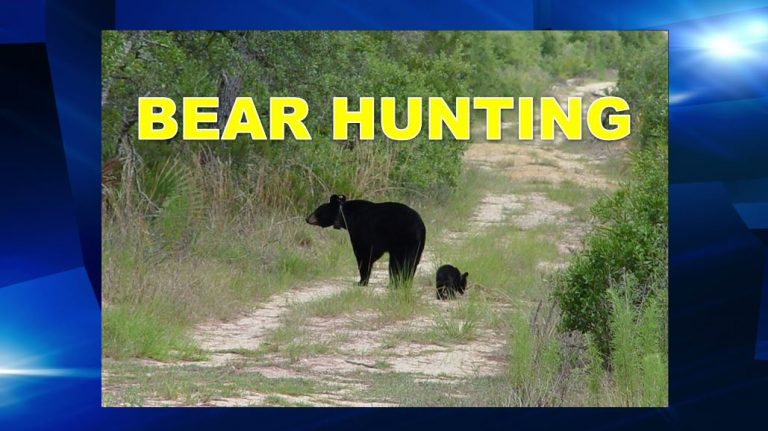 FWC approves bear hunting in certain areas & removal solutions for residents
