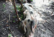 animal cruelty, animal abuse, marion county news, ocala news, op, ocala post