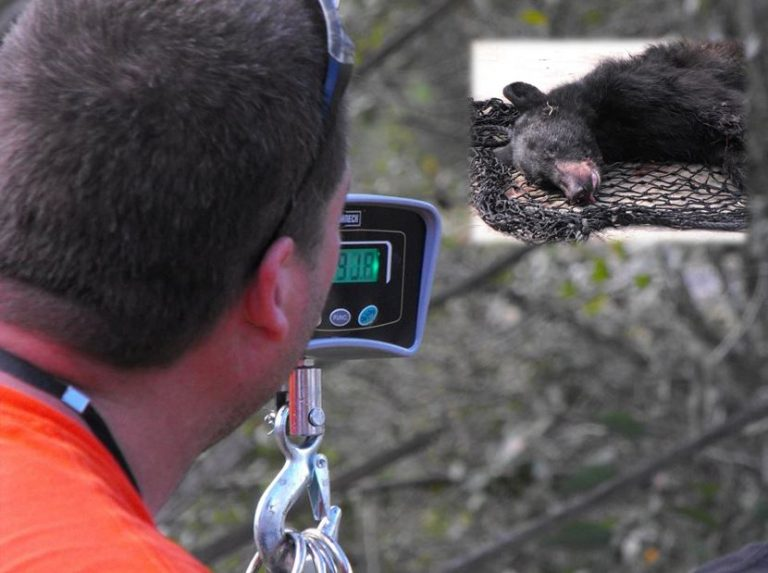 Man accuses FWC of giving back illegal bear killed during bear hunt