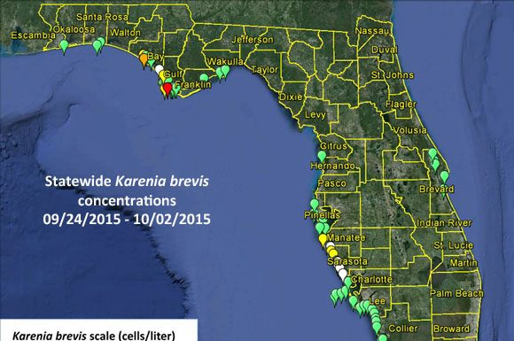 red tide, fishing, florida red tide, ocala news, marion county news