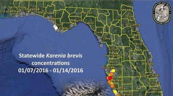 fish kill, florida fishing, red tide, ocala post, fishing report