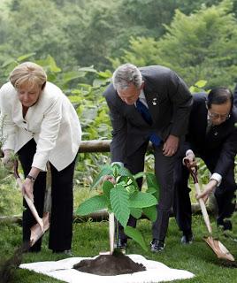 Former president Bush planting a Kratom tree, kratom, kratom tree.