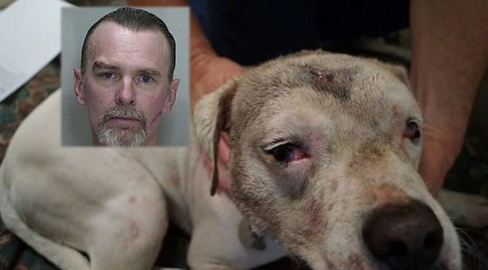 animal abuse, animal cruelty, animal abuser registry list, ocala news, ocala post