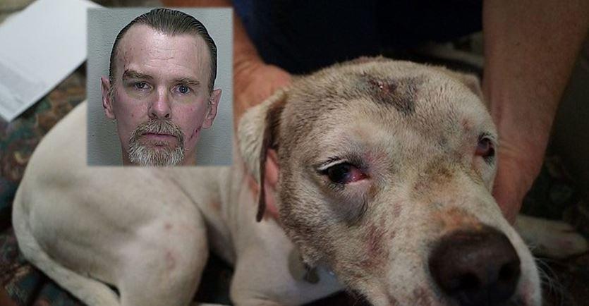 animal abuse, animal cruelty, animal abuser registry list, ocala news, ocala post